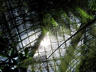 Se zimní zahradou se můžete přenást třeba ido exotickýchkrajin